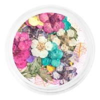 IRISK professional, Сухоцветы набор в баночке, №01