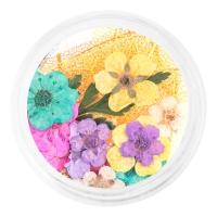 IRISK professional, Сухоцветы набор в баночке, №03